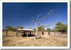 The Bullita Homestead cattle yards