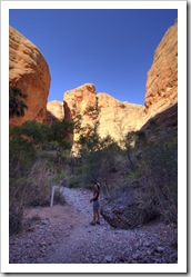 Lisa hiking in to Mini Palms Gorge