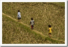 Young children exploring the rice paddies near Ta Van Village
