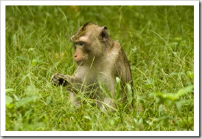 Monkeys inside Angkor Thom
