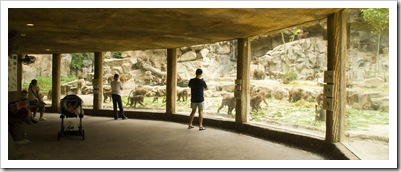 The Singapore Zoo: the Hamadryas Baboons viewing platform