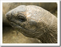 The Singapore Zoo: Giant Tortoise