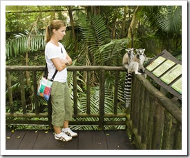 The Singapore Zoo: Lisa getting close and personal with a couple of Lemurs in the Fragile Forest walk-through exhibit