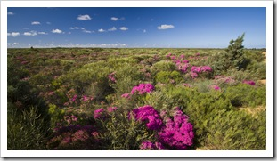 Wildflowers in Kalbarri National Park