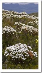 Wildflowers galore on our hike to Bluff Knoll
