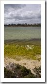 Yangie Island