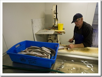 Filleting King George Whiting