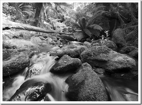 Rainforests of the Otway Ranges