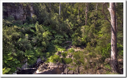 The view of the forest from the top of Phantom Falls