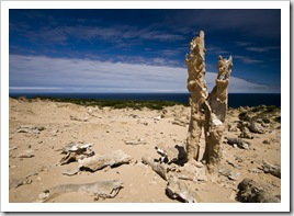 The calcified forest at the south end of King Island