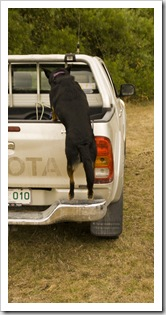 'D the Dog' loading into the Hilux