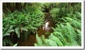 The trail to Hogarth Falls