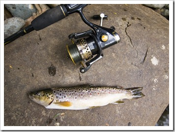A succesful afternoon of trout fishing on the Franklin River