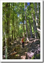 Lisa hiking through the forest around Lake Saint Clair