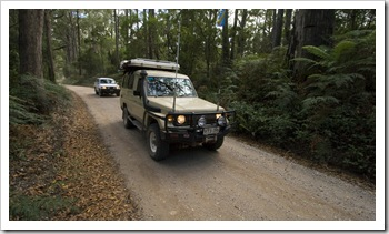 Driving into Mount Victoria Forest Reserve