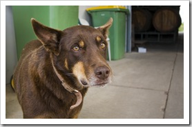 One of the employees at Chambers Winery