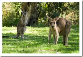 Local wildlife at Geehi Flats