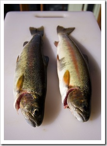 A couple of Rainbow Trout from the Thredbo River