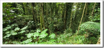 Lush rainforest in Dorrigo National Park