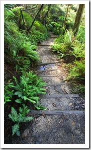 The hiking trail to Leura Cascades