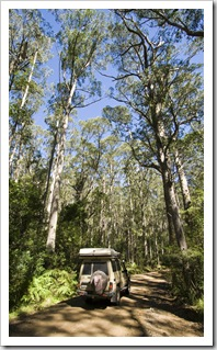 The Tank in Barrington Tops National Park