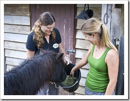 Branell Homestead: feeding Angel the miniature pony