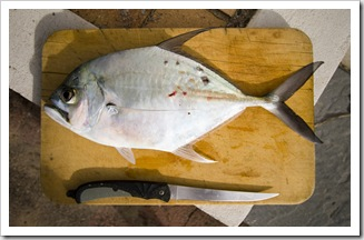 A nice sized trevally from the reef below Point Arkwright