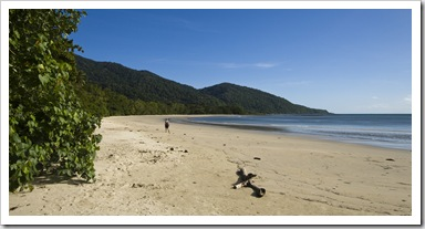 The beach extending north from Cape Tribulation