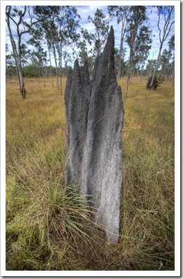 Termite mounds litter the plains in Lakefield National Park