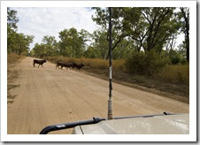 Roadblocks in Lakefield National Park
