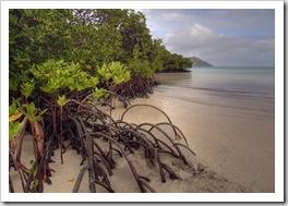 Mangrove Beach on the way to Blue Lagoon