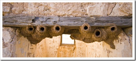 Bird nests in the ruins of Cadelga Homestead on Cordillo Downs Station