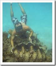 Giant clams around Lizard Island